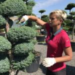 Ozdobte svoji zahradu borovicí lesní